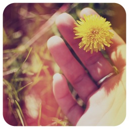 The Flower of My Life is Held in your Hands
